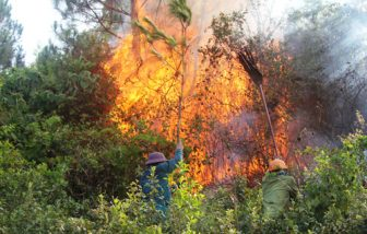 Forests on high fire alert in tourist hotspot Phu Quoc