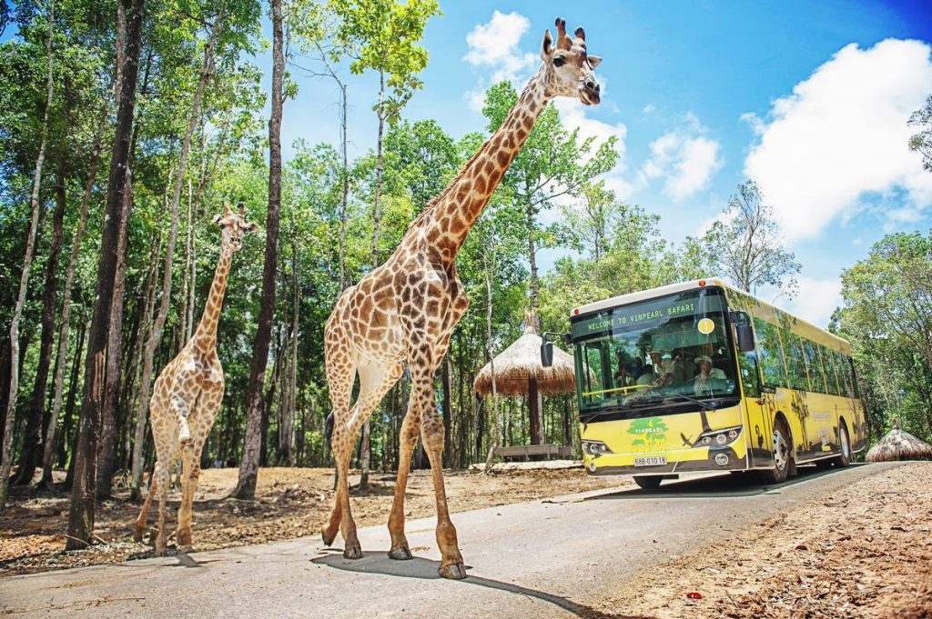 Safari in phu quoc island, Phu Quoc info, Phu Quoc Attractions