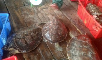Endangered sea turtles found at seafood wholesale facility