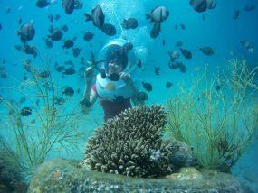 Stunning underwater landscapes in Phu Quoc island